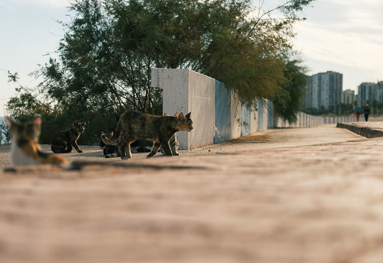 Street Cats Animal Themes Animals In The Wild Boulder Cats Coastline Day Domestic Animals Feline Feline Portraits Mammal Mersin Turkey Nature No People One Animal Outdoors Rock Formation Sky Street Cats Tree