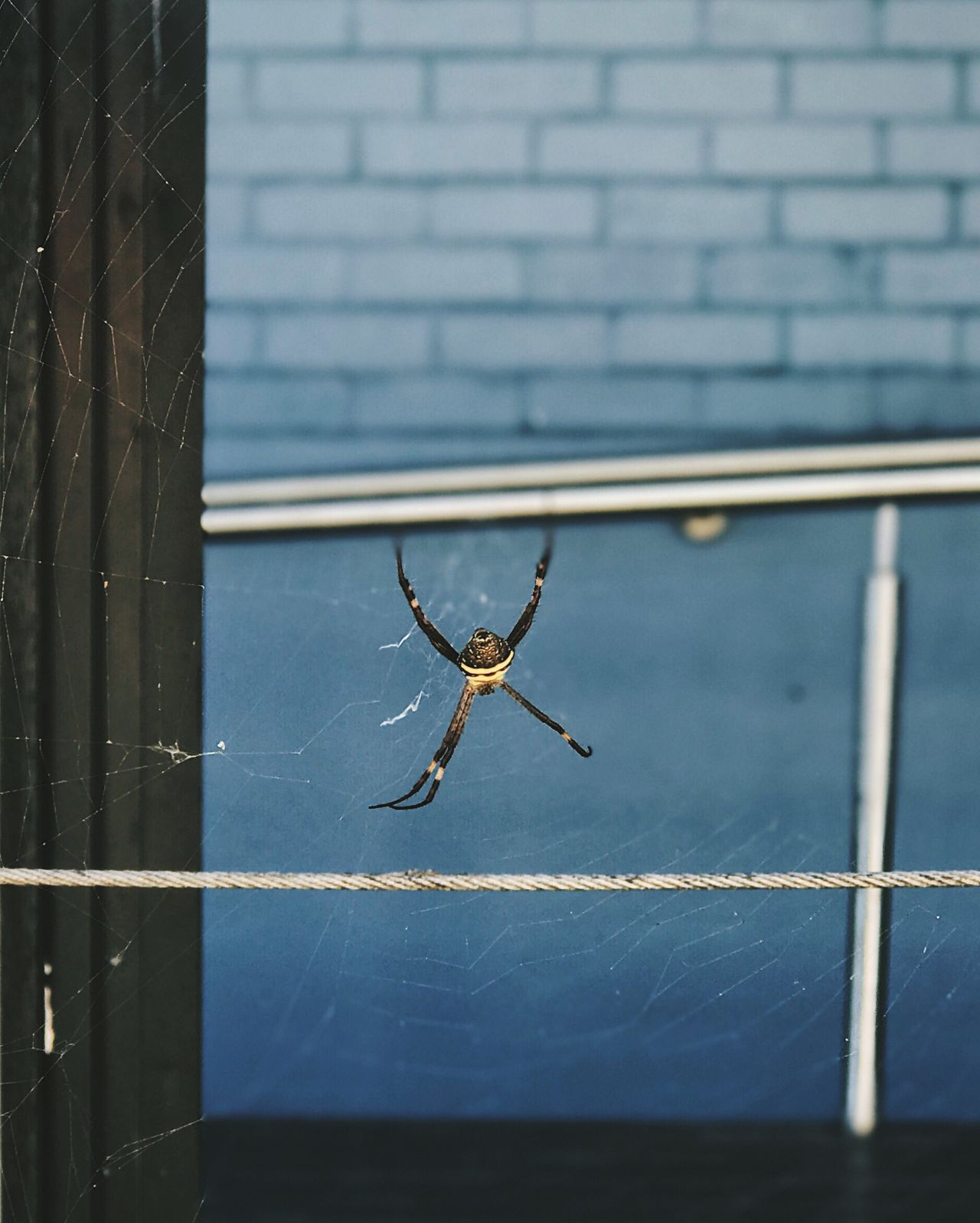 One Animal Animal Themes Spider Close-up Animals In The Wild No People Insect Spider Web Day Animal Wildlife Animal Leg Outdoors Nature Survival Web Streetphotography Street Photography