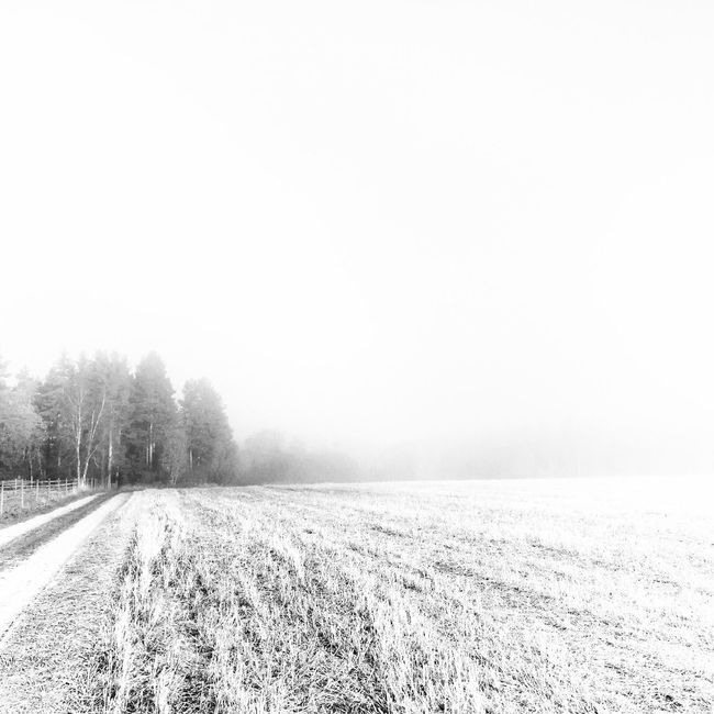 Foggy October Winter Nature Tranquility Cold Temperature Snow Tranquil Scene Field Beauty In Nature Tree Copy Space Weather Landscape Farm Scenics Rural Scene Day Agriculture No People Clear Sky Outdoors