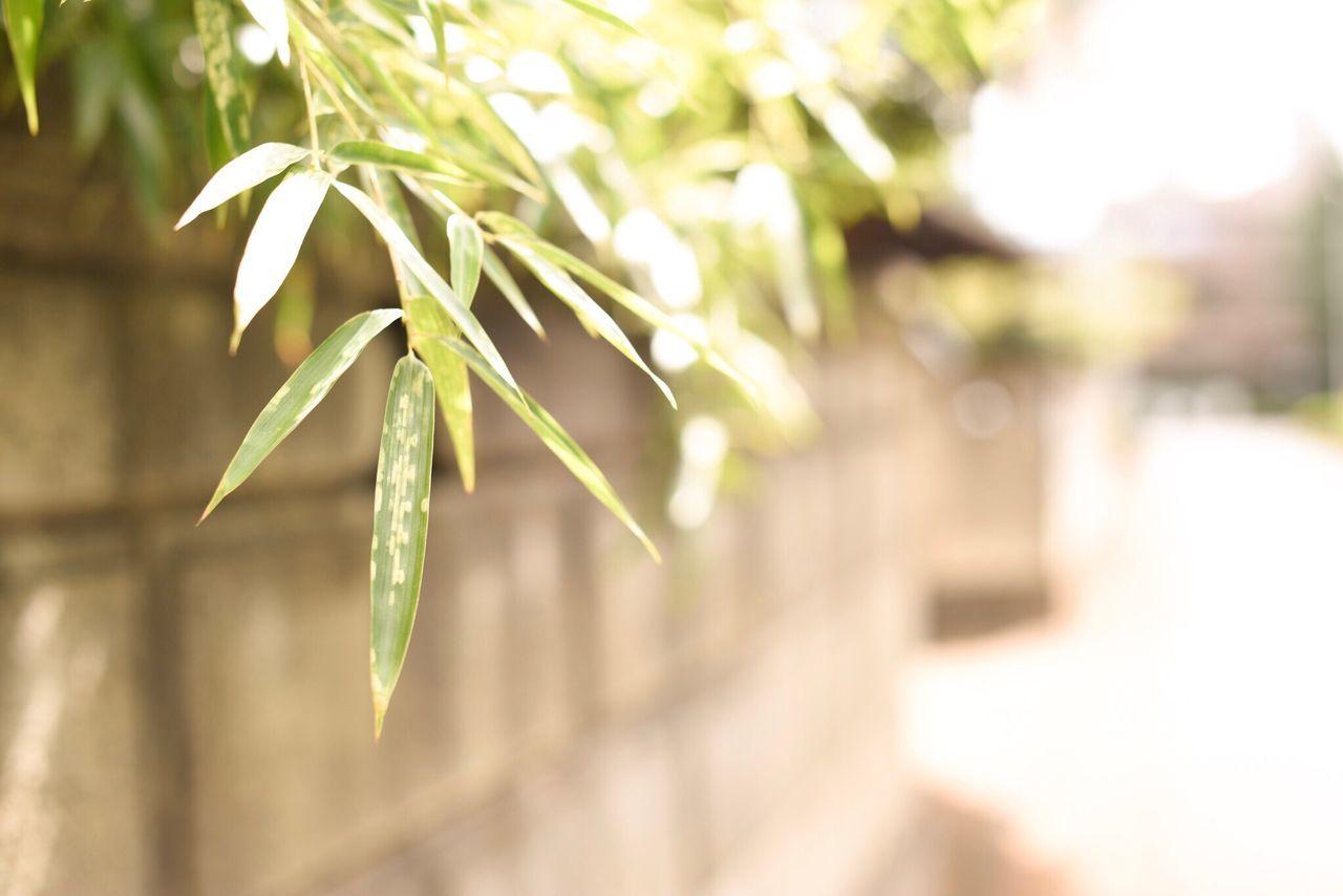 夏の日差しがもはや懐かしいね。 Plant Nature Green Color No People Leaf Outdoors Beauty In Nature Day Fragility Walk Japan Snapshots Of Life