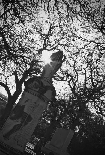 Light And Shadow Sunrise And Clouds Texas Dallas Dallas Texas Dallas Tx Texas Photographer Cemetery Wanderings Cemeterybeauty Praying Hands Praying Hands Statues Cemetery_shots Cemetery Photography Cemetery Sunrise Sunlight And Shadow Texas Texas Skies Blackandwhitephotography Blackandwhite Human Representation Branch