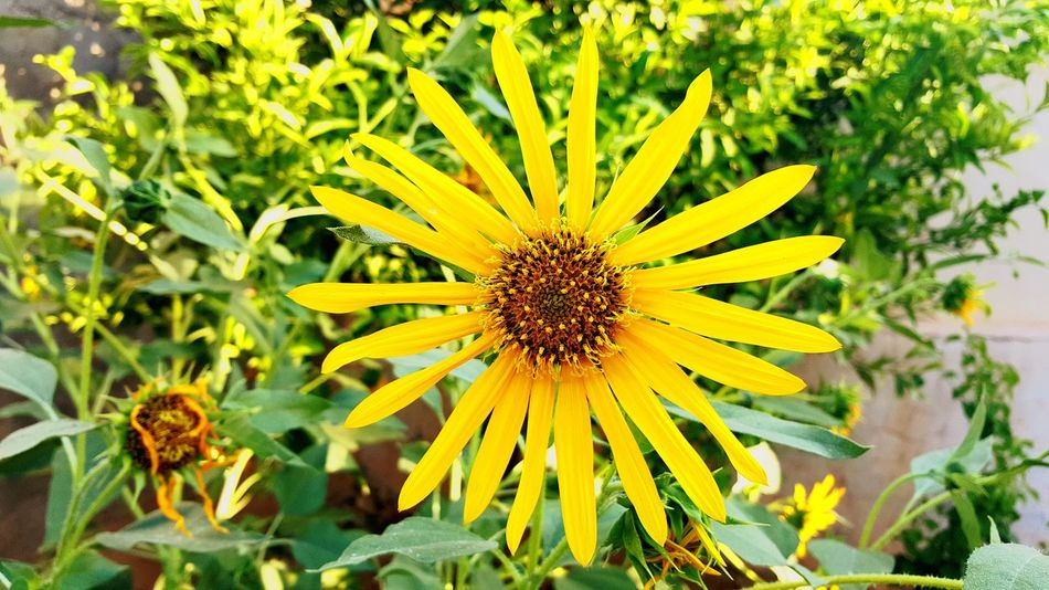 Flower Plant Growth Beauty In Nature Petal Flower Head Blooming Close-up Outdoors No People Yellow Fragility Day Nature Freshness Flowers First Eyeem Photo