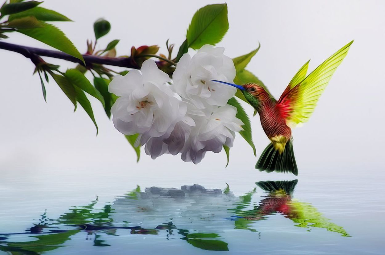 Flower Reflection Nature Beauty In Nature Flower Head Water Hummingbird Edit Multi Colored Edit Junki Beauty In Nature Artistic Expression Blossoming Tree Cut And Paste