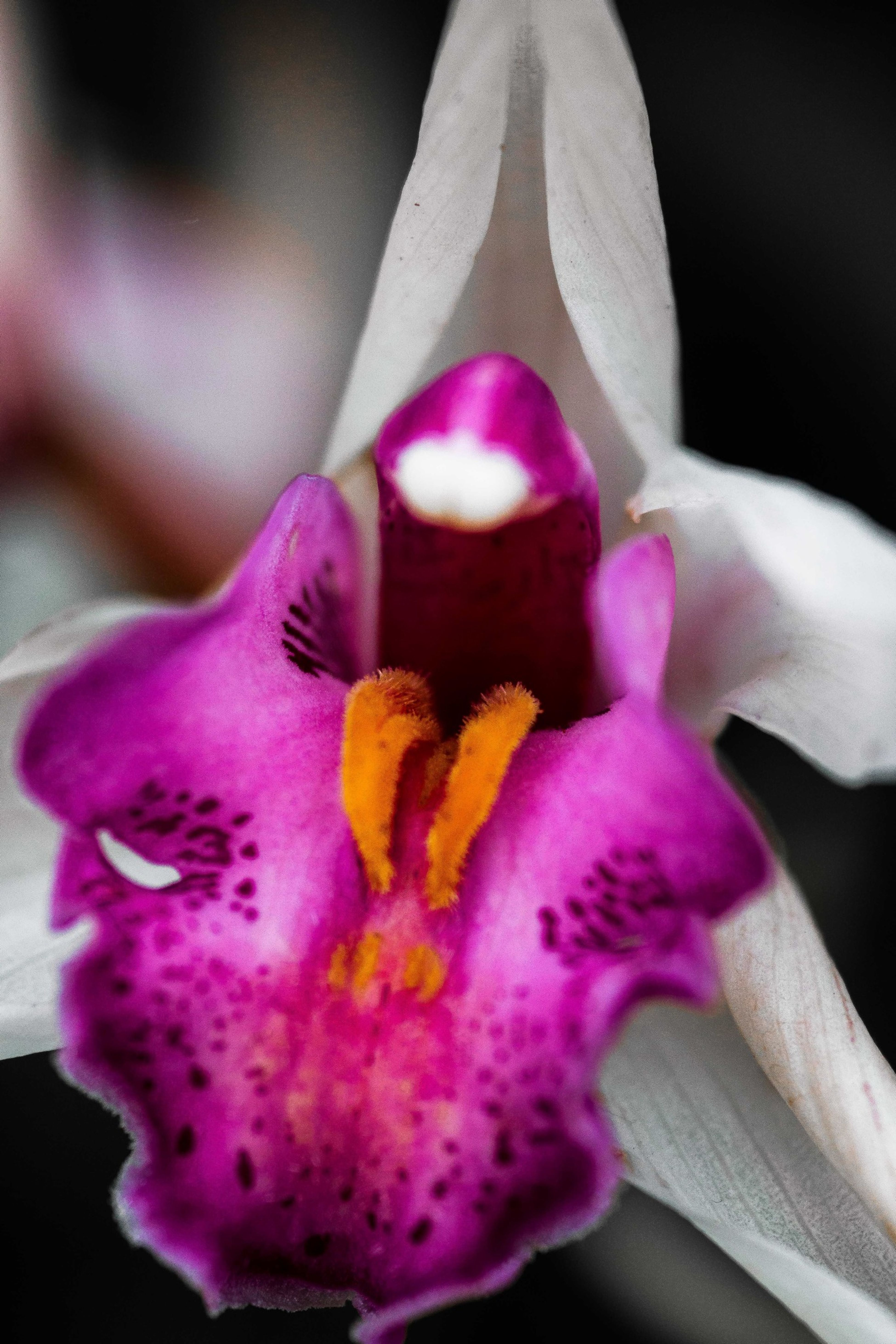 Mick Jagger Orchids Flowers Colors EyeEm Nature Lover