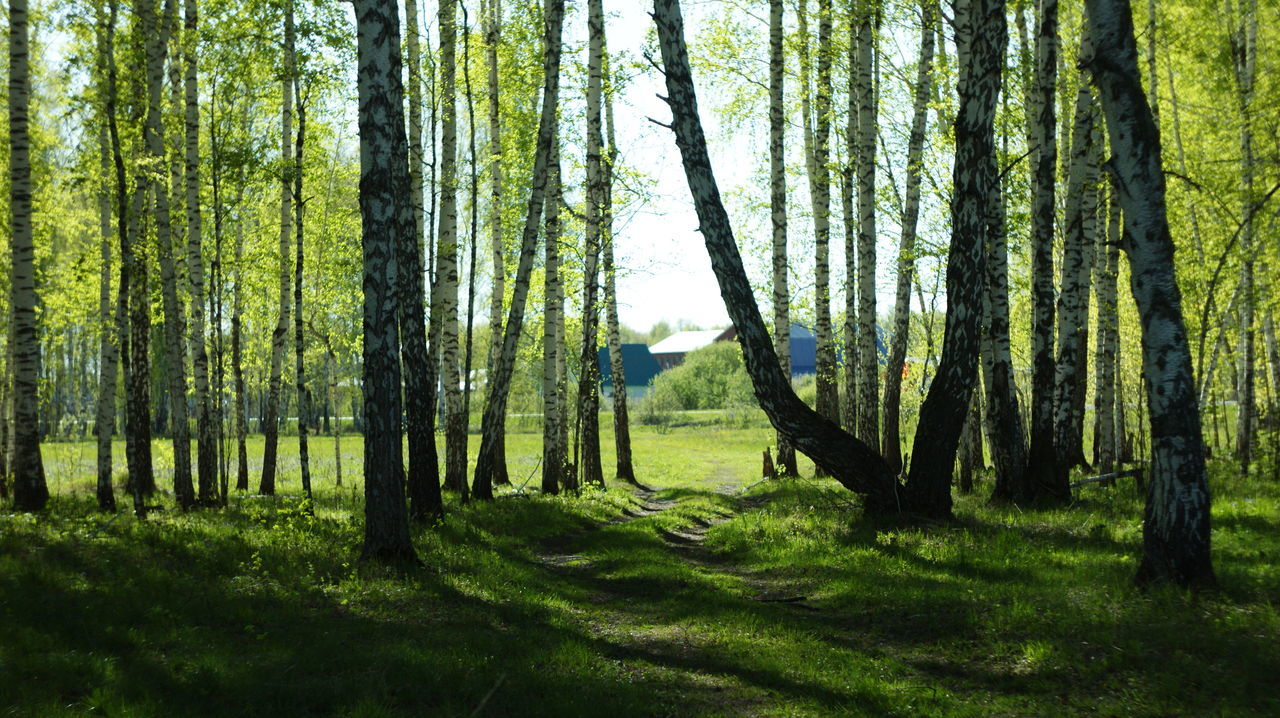 Природа Тюмень Day Sky Outdoors россиямоялюбовь отдых No People Tree Travel Photography Beauty In Nature Nature Summer