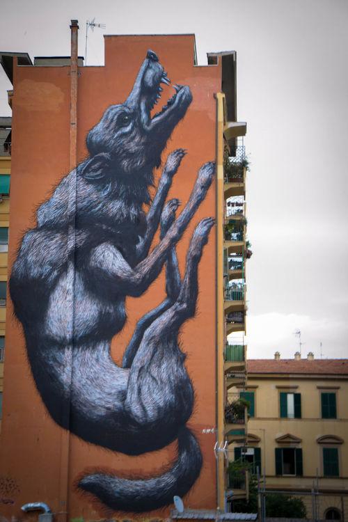 #italy #Rome #Streetart #streetphotography #Sunday #sunset #sun #clouds #skylovers #sky #nature #beautifulinnature #naturalbeauty #photography #landscape #testaccio #wolfstyle