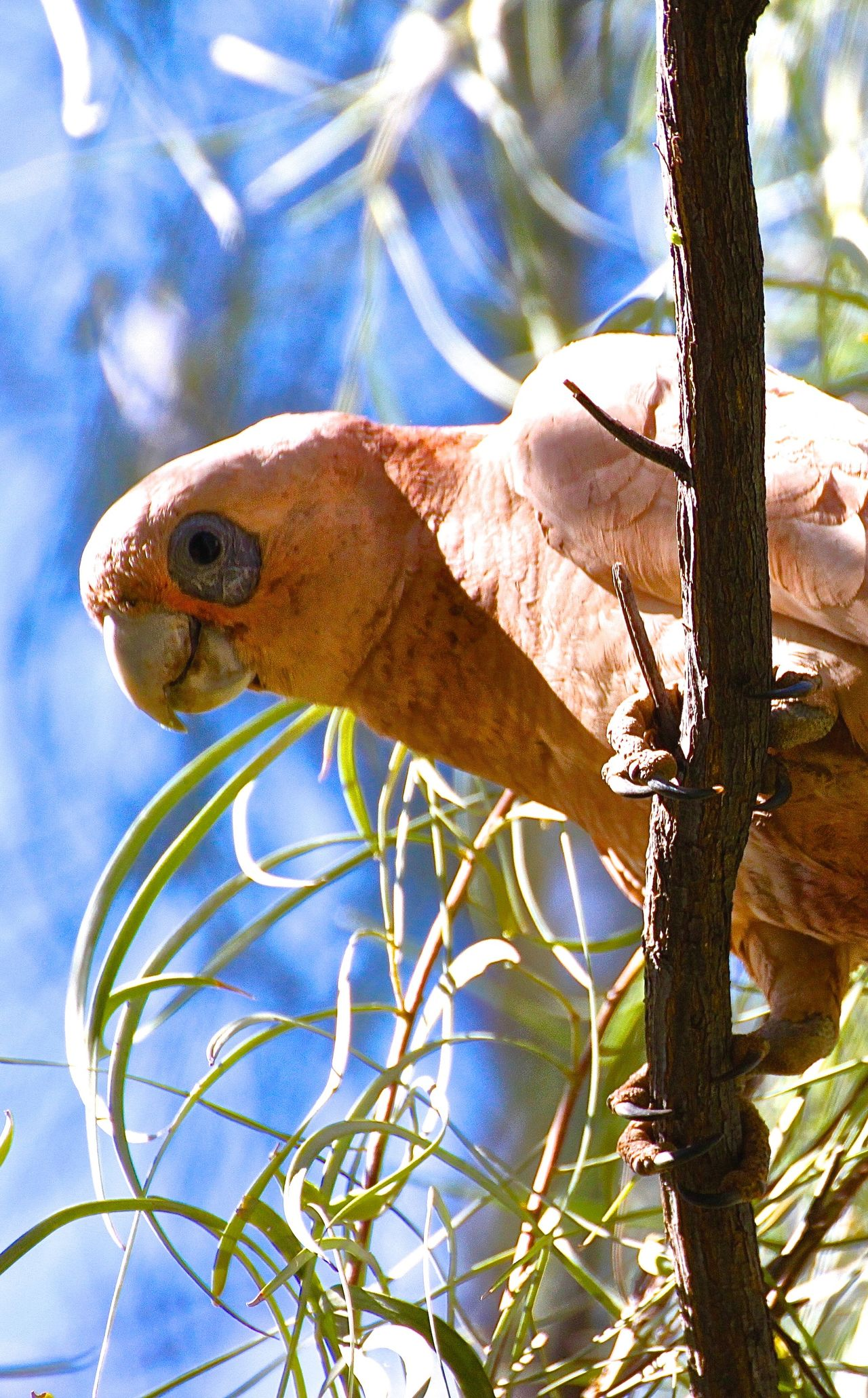 Beautiful stock photos of parrot, Animals In The Wild, Branch, Day, No People