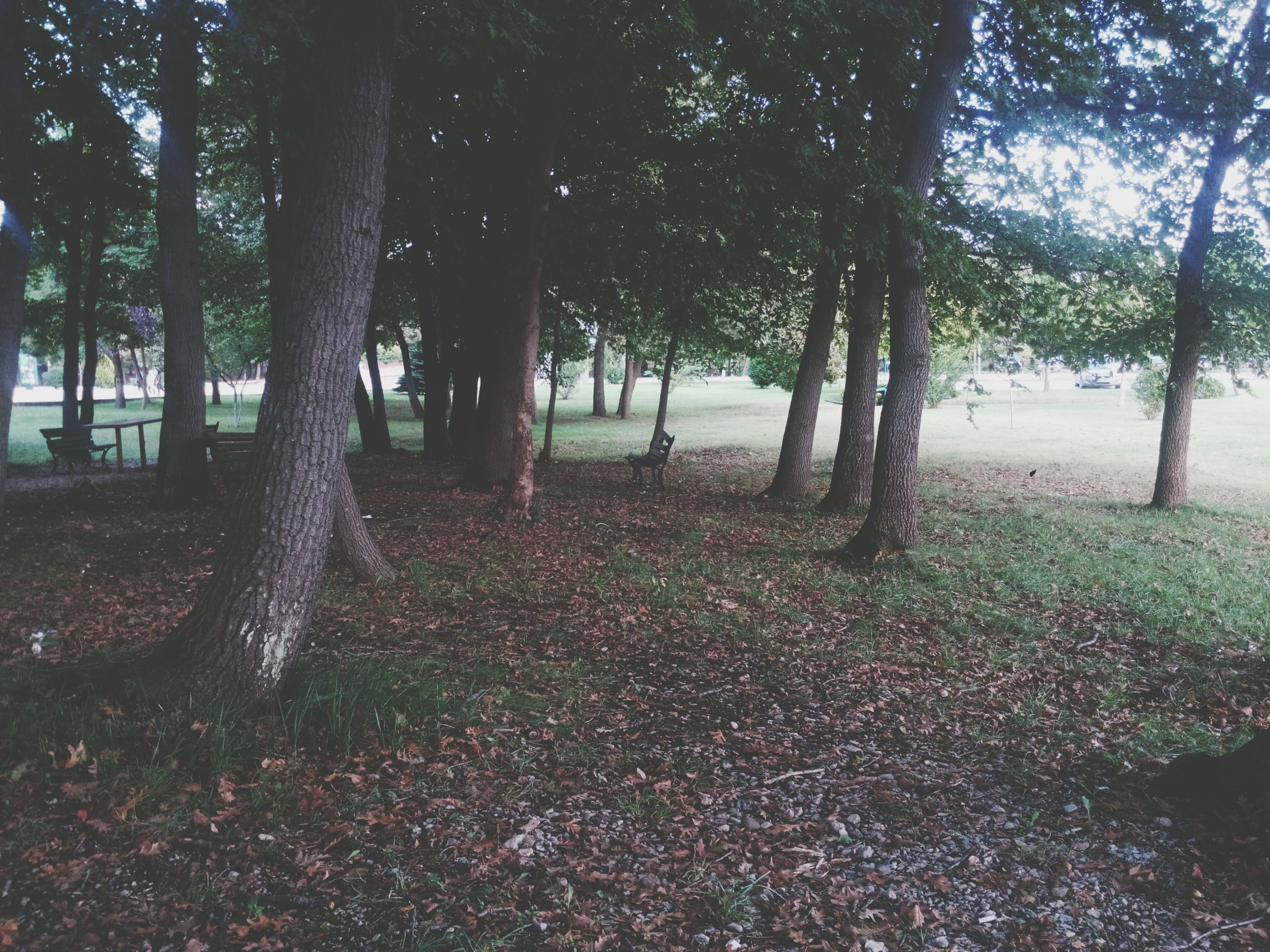tree, tree trunk, tranquility, growth, nature, tranquil scene, beauty in nature, park - man made space, branch, scenics, sunlight, no people, day, outdoors, field, leaf, shadow, landscape, idyllic, water