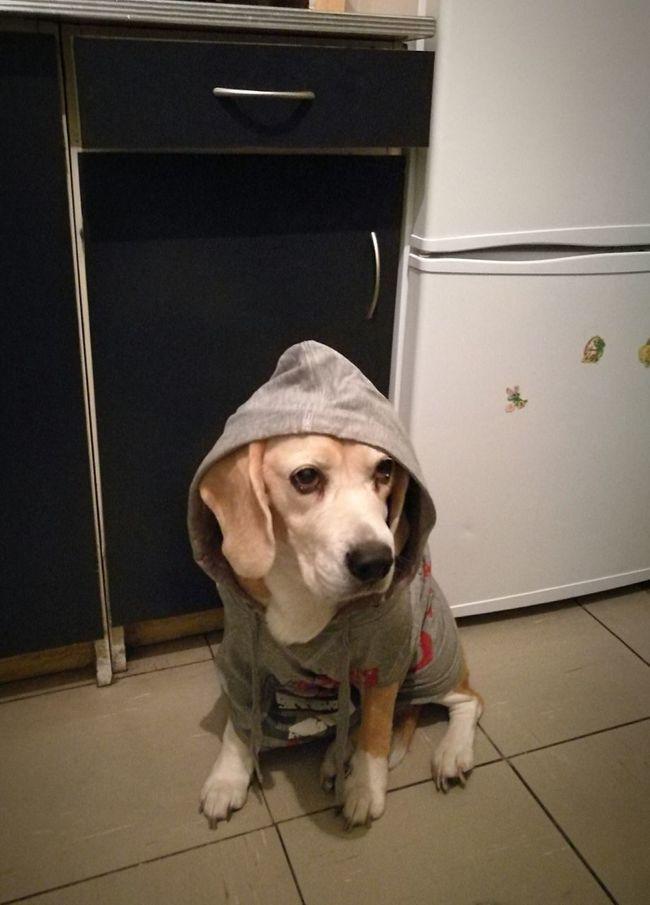 Tekila 💖💖💖💖 Hi! Hello World Check This Out Taking Photos Enjoying Life Hanging Out My Pet My Dog 💖 Doglifestyle Dog Love Beagle Beagleoftheday Beaglelove