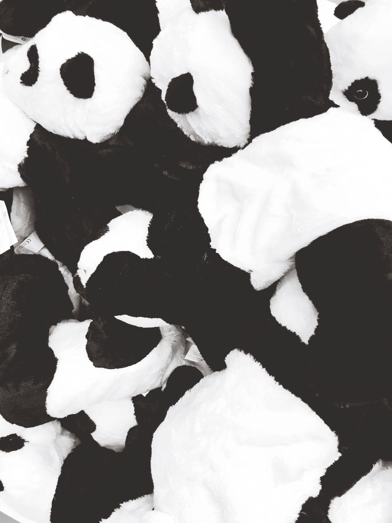 Panda Pupets Blackandwhite Monochrome Photography