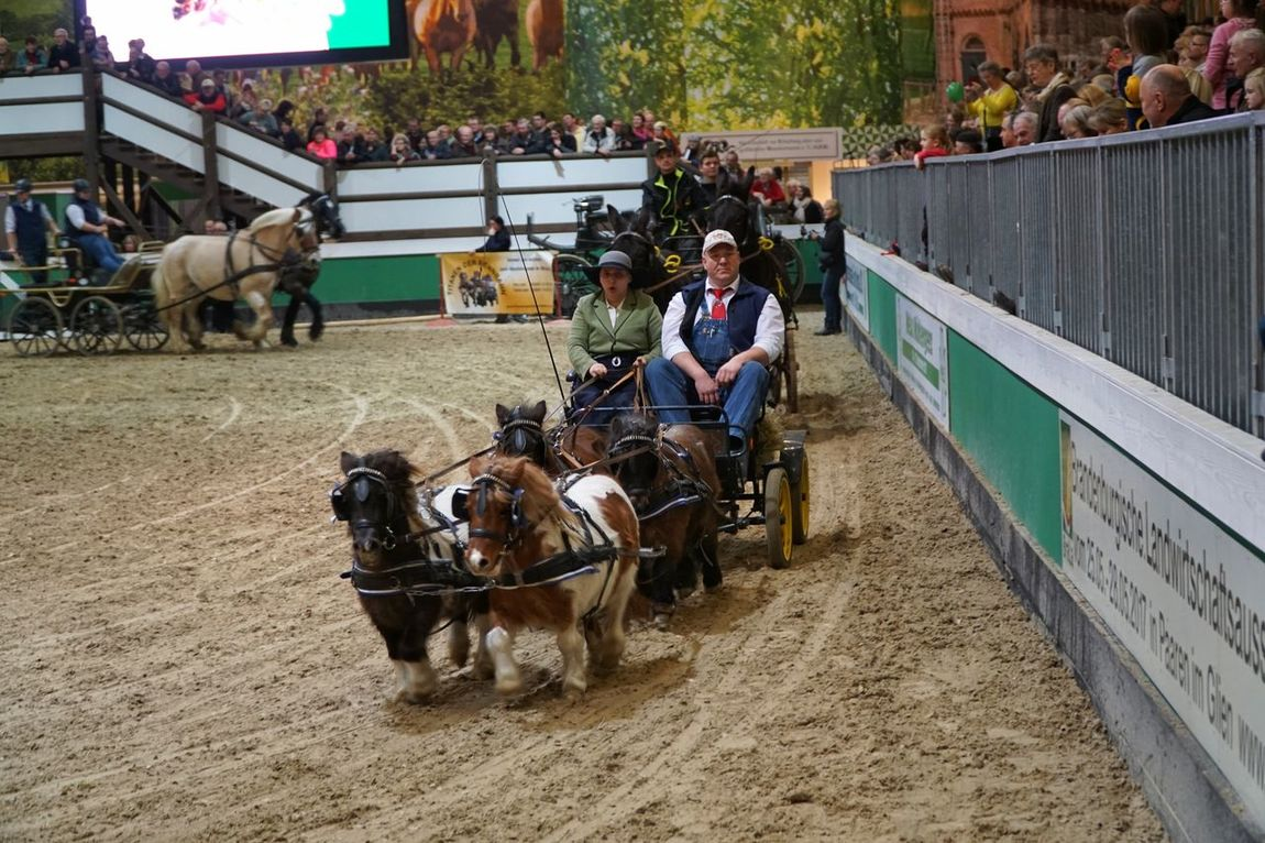 Horsedrawn Domestic Animals Horse Horse Cart Mammal Working Animal Men Outdoors One Person Cart Day People Adult Pony Berlin Grüne Woche