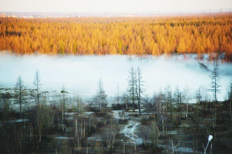 Салехард.туман.лес