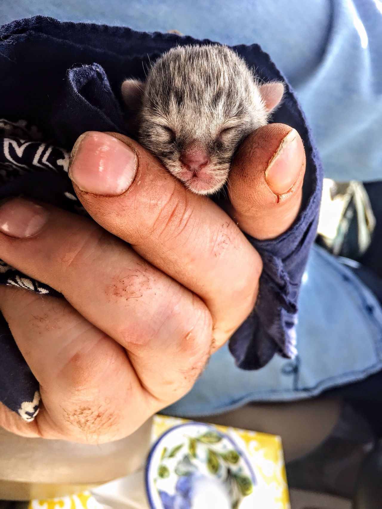 Miracle Of Life Beauty In Nature New Born Baby