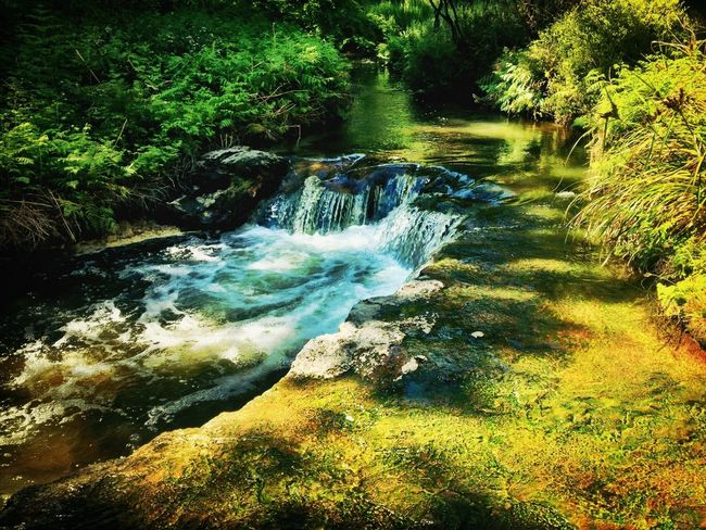 Things That Are Green The beautiful natural hot water stream in Rotorua, New Zealand New Zealand Middle Earth