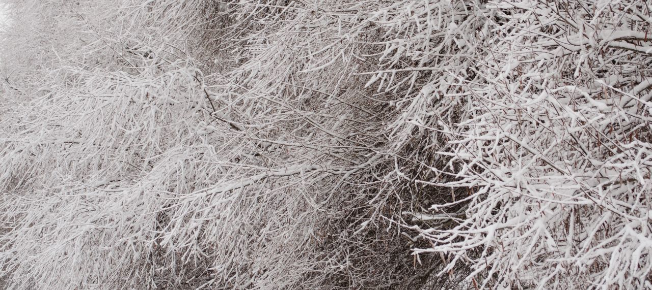 Foggy Day Budapest Snow ❄ Nature Leaf Plant Tree Frost Frosty Winter Abstract Art Structure Snowday