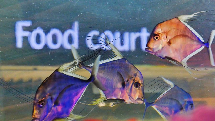 Aquarium Close-up Animal Themes Water People Togetherness Outdoors Adults Only Sea Life Adult Day Food Eating Fish Fish-Food