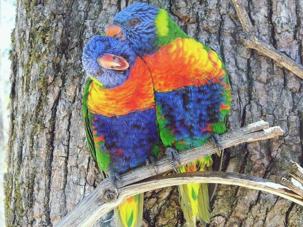 Bird Photography Birds Colors Naturecolor