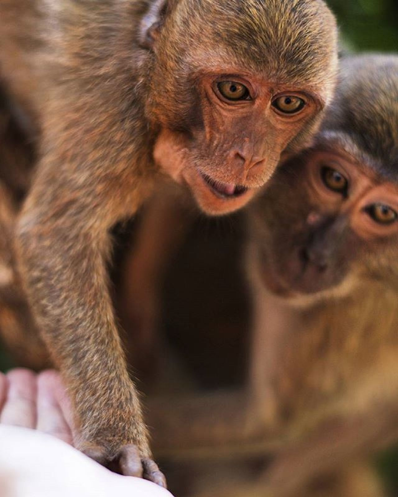 Feedingwildmonkeys Harmonywithnature Monkey Animal Jungle Feeding  Photography Thailand
