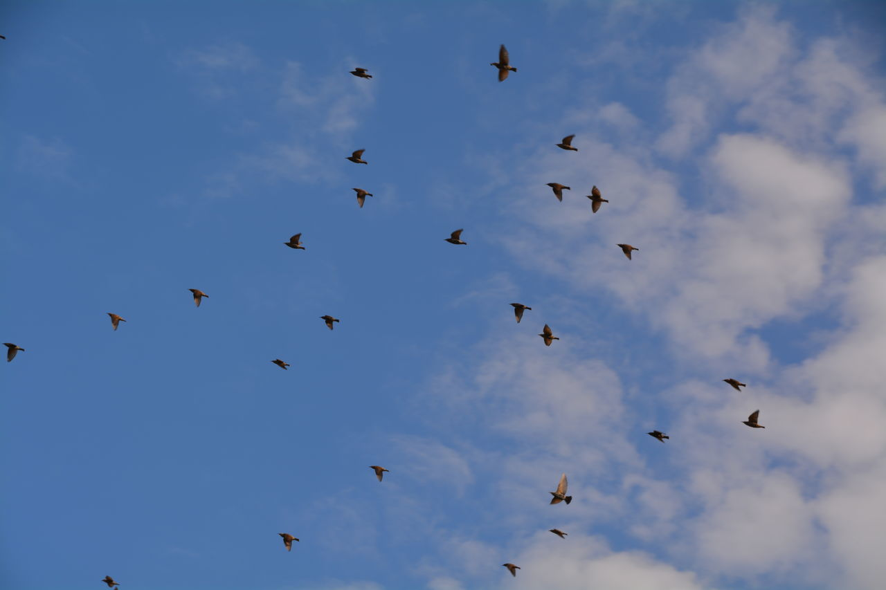 flying, bird, animals in the wild, animal themes, large group of animals, flock of birds, animal wildlife, low angle view, cloud - sky, sky, nature, mid-air, day, outdoors, no people, beauty in nature, spread wings