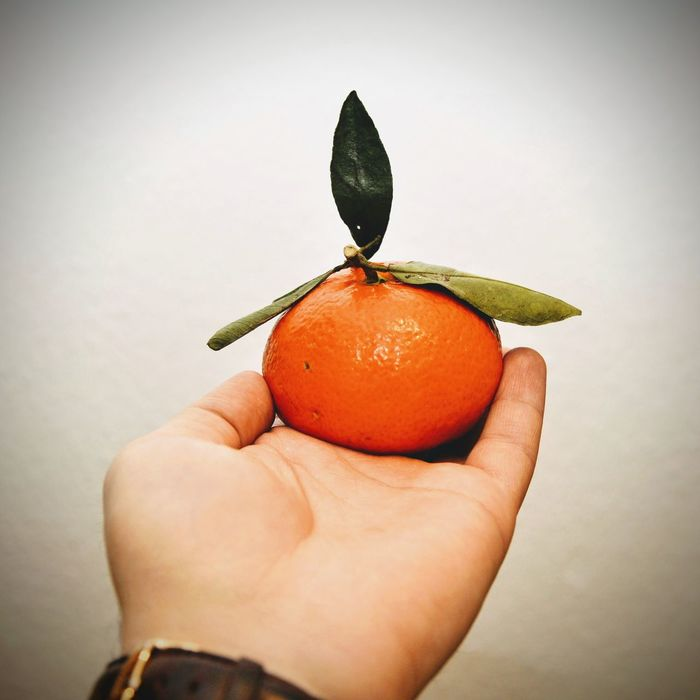 Citrus Fruit Close-up Food Freshness Fruit Healthy Eating Holding Human Hand Leaf Orange Orange - Fruit Orange Leaves