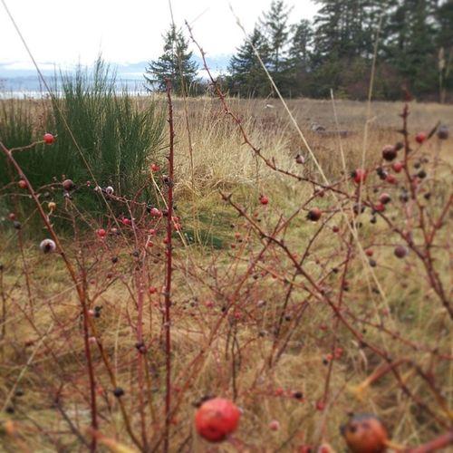 @amieltabernero @morabi88 these berries are edible right? Iifym Eatdirtydonttrain Brenplant Unclewillystrikesagain