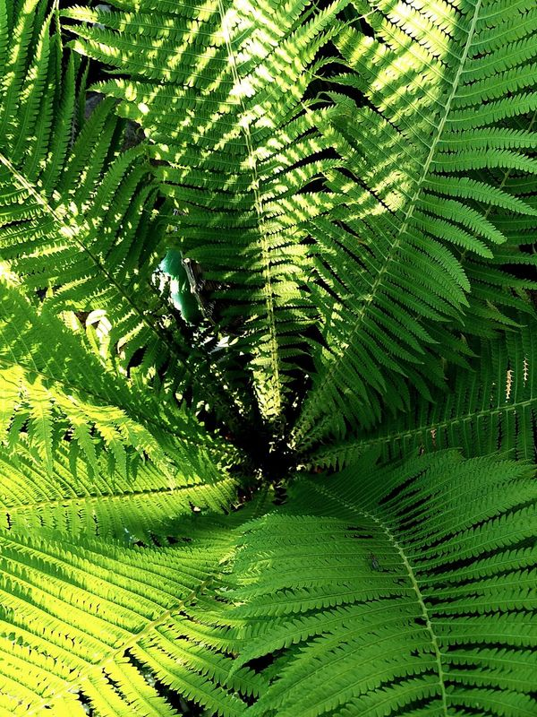Nature Green Color Beauty In Nature Day No People Freshness
