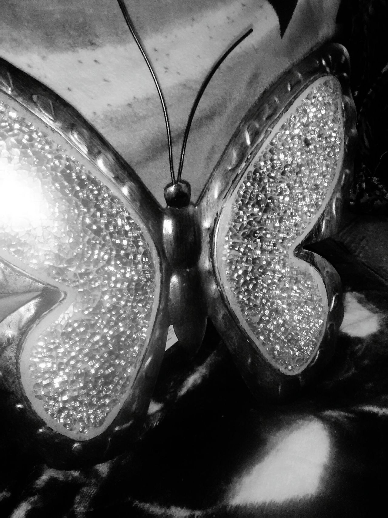 43 Golden Moments Black Butterfly