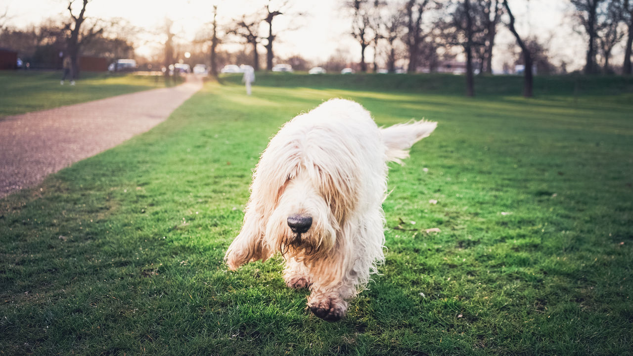 A Dog Comes Towards Me! Cute Dog! Dog In Park Hyde Park Muddied Dog White Dog