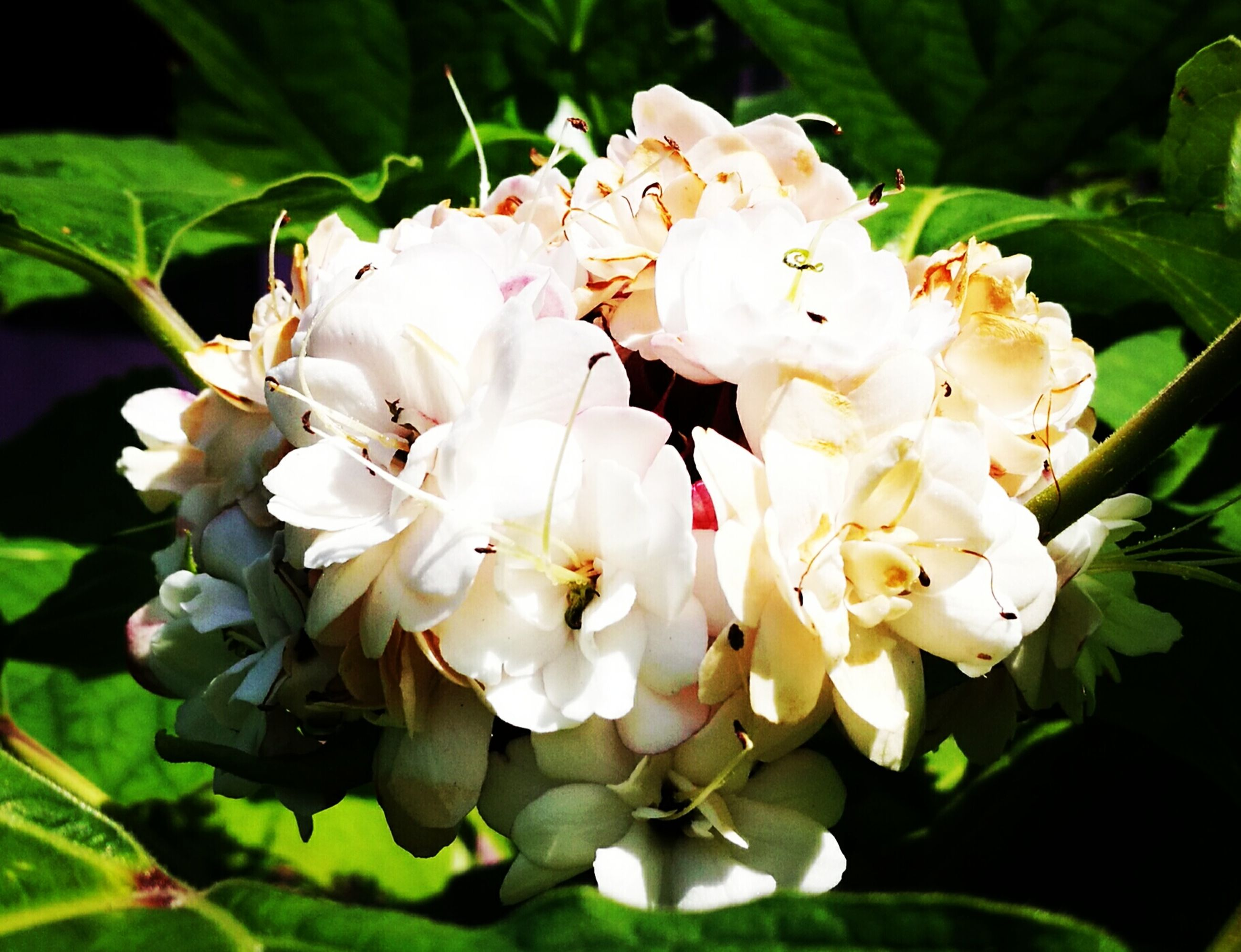 flower, nature, growth, beauty in nature, fragility, freshness, plant, petal, flower head, outdoors, close-up, insect, blossom, blooming, stamen, day, no people, leaf, animal themes, rhododendron