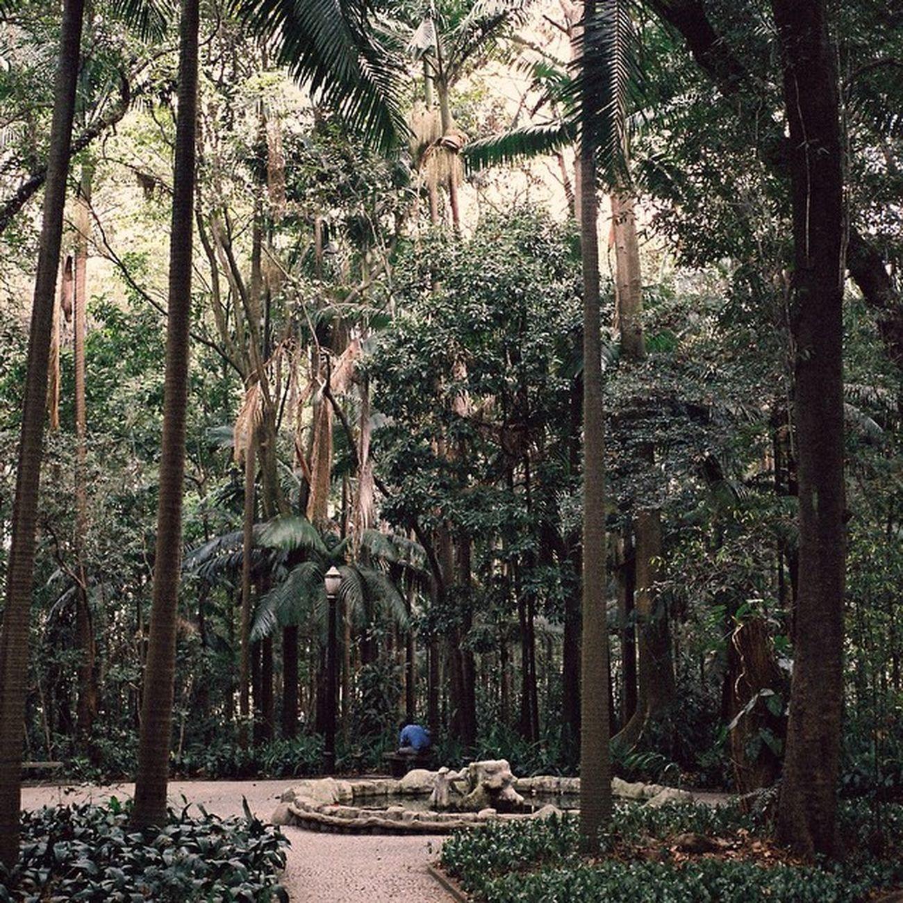 Brasil Brazil Saopaulo Paulista City Contax Cymera Cymeraapp Vscocam VSCO People Park