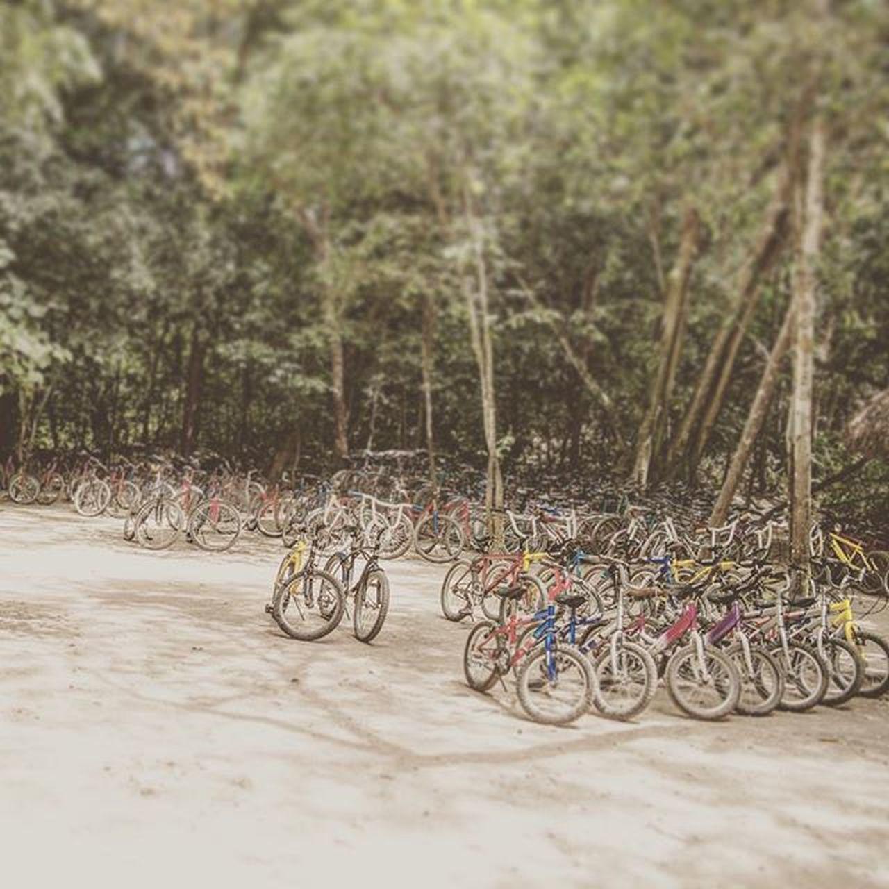 A lot of bikes at Coba. Mexico Mexiko Mexico2015 Coba Cobaruins Amassofbikes Bikingforeverybody Rideabike Crazybikes