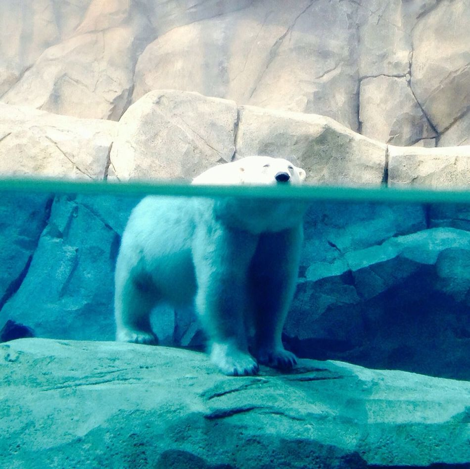 Beautiful stock photos of bear, Animal Themes, Animals In The Wild, Arctic National Wildlife Refuge, Bear