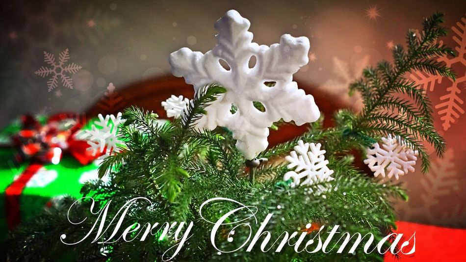 My tiny tree 🌲 MerryChristmas Christmas Tree Home Holiday Peace Joy Friends Family Happiness Photography Sony A6000 Eye4photography  EyeEm Best Shots EyeEm Masterclass December Longisland New York Eastcoast Eyemphotography Beautiful