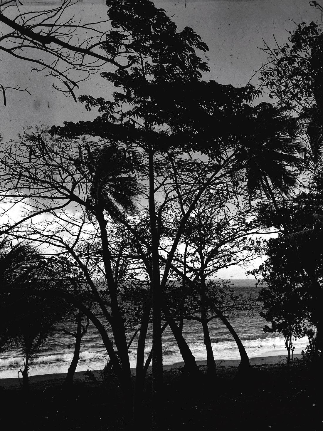 Trees Beach Dark Silhouette Beachphotography Blackandwhite