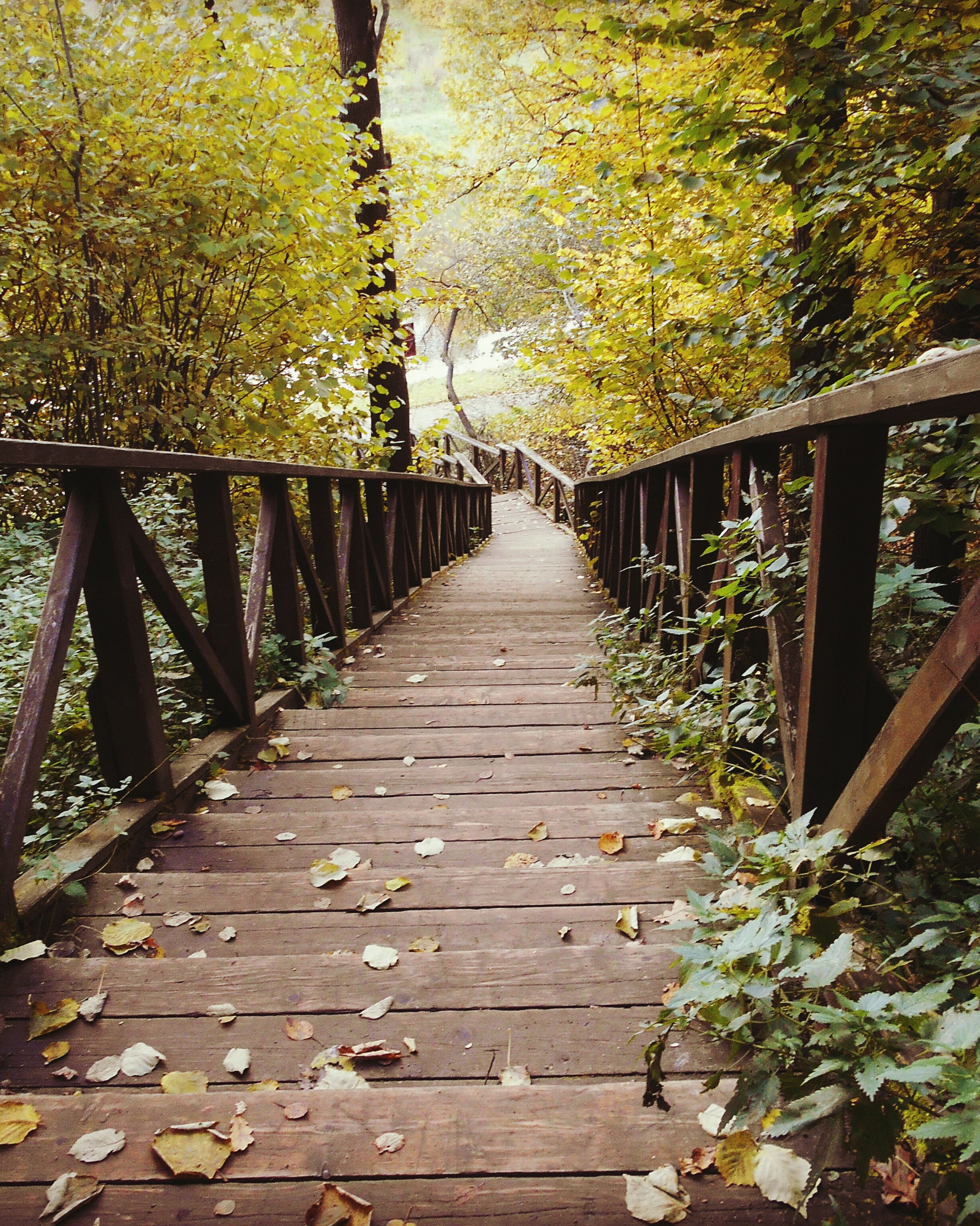 tree, growth, the way forward, leaf, tree trunk, nature, plant, diminishing perspective, tranquility, railing, day, footpath, tranquil scene, outdoors, green color, narrow, branch, scenics, no people, beauty in nature