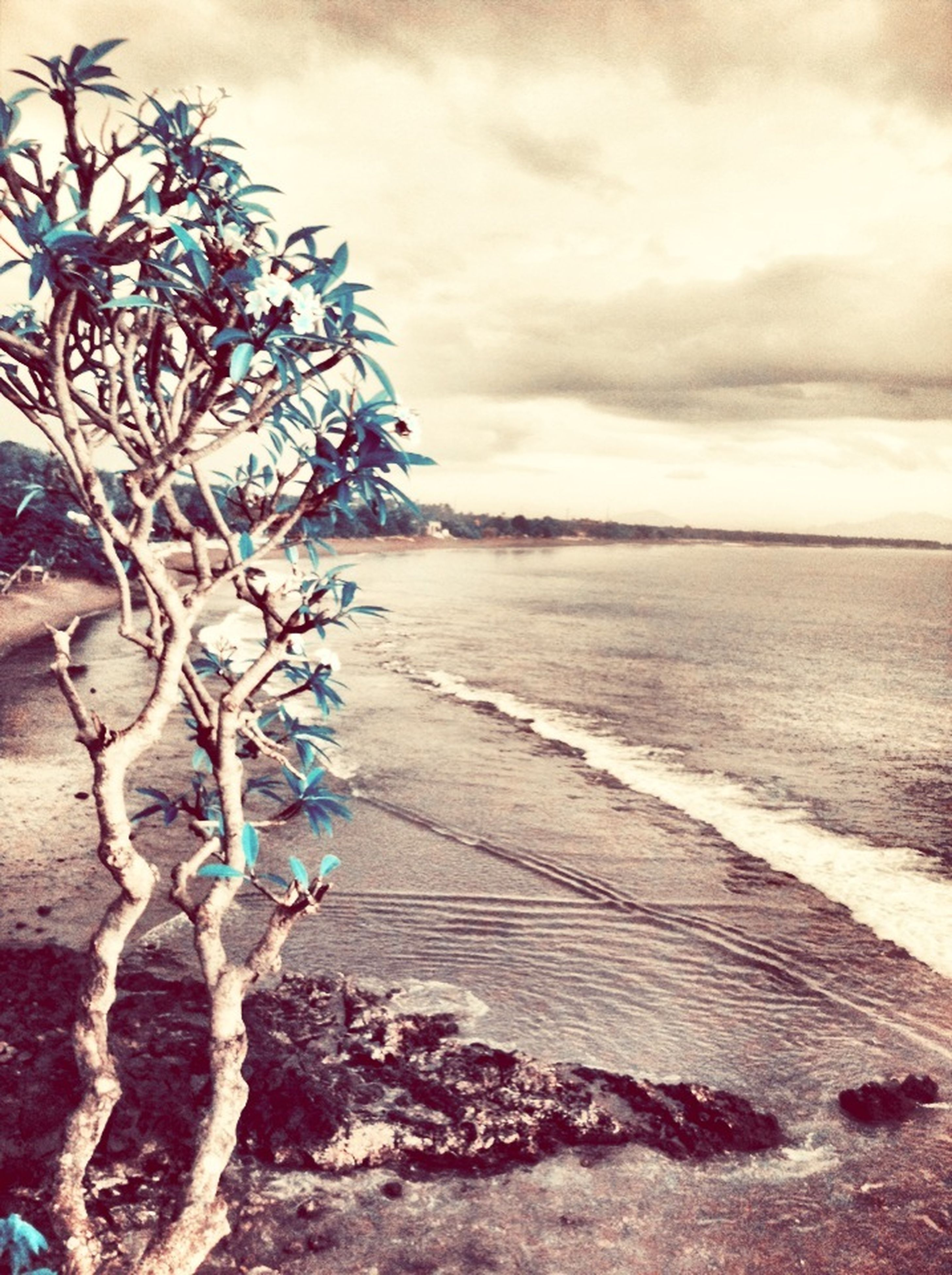 sea, beach, sky, water, horizon over water, nature, beauty in nature, shore, flower, tranquility, sand, tranquil scene, scenics, cloud - sky, plant, growth, no people, day, outdoors, sunlight