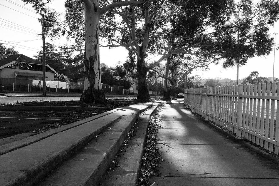 Morning glory Tree Outdoors Shadows & Lights Monochrome Day