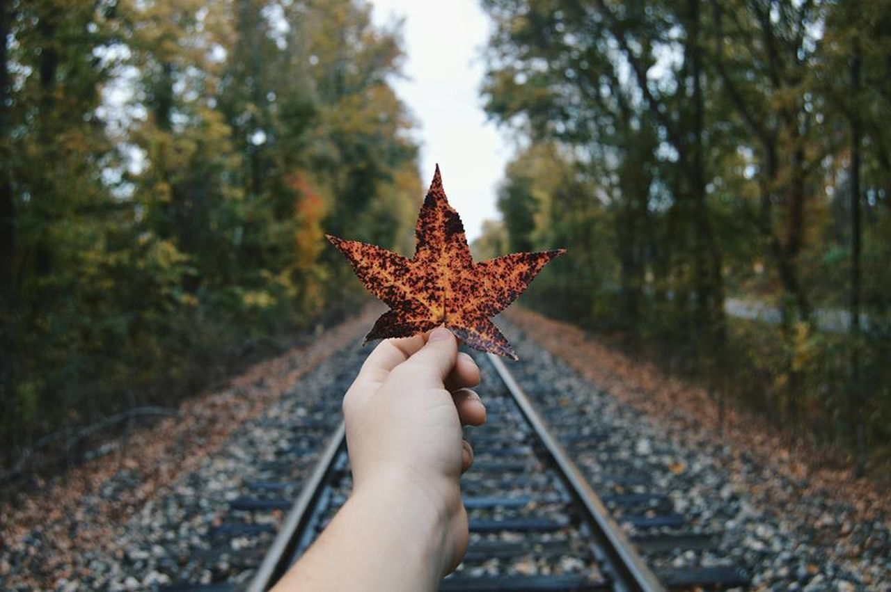 Autumn Carefree Close-up Creativity Cultures Day Dry EyeEm Best Shots Fall Colors Full Frame Fun Hand High Angle View Leaf Leaves Natural Pattern Nature_collection No People Popular Photos Rail Transportation Railroad Track Season  The Week On EyeEm Trees Treescollection