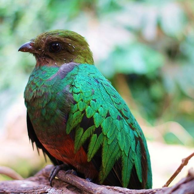 Quetzal Nature Canon Green Bird Animal Nature Photography Nature's Diversities Nature_collection Outdoors No People