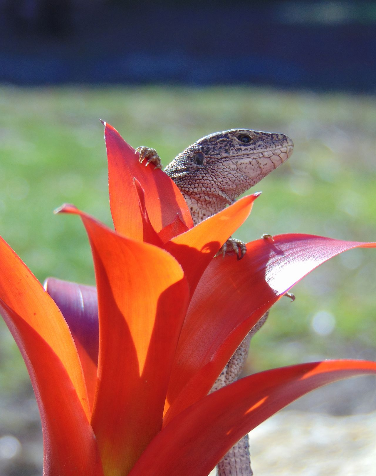 Animal Animal Eye Animal Photography Animal Themes Animals In The Wild Beauty In Nature Close-up Day EyeEm Nature Lover Hello World Lizard Natural Pattern Nature Nature Nature Photography Nature_collection No People Outdoors Plant Red Color Relaxing Reptilian Sunbathing Zoology
