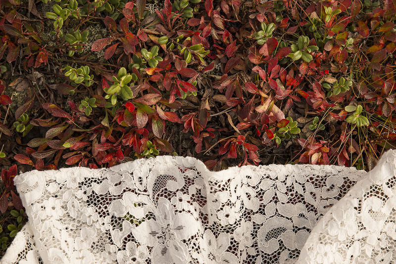 A red fall leaf foliage and white lacy wedding dress Fall Colors Fall Foliage Lacy Lapland Plants Red Fall Wedding Weddings Around The World Fall Fall Wedding Flower Foliage High Angle View Lace Lace Dress Lace Wedding Leaf Nature No People Outdoors Red Foliage Texture Twig Wallpaper Wedding Dress