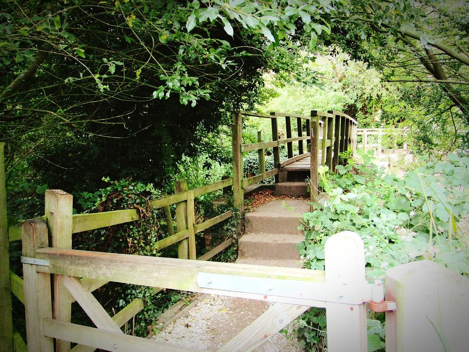 East Yorkshire Driffield Taking Photos Trees Tree_collection  Gates Natural Beauty Views Nice Views Natural Photography