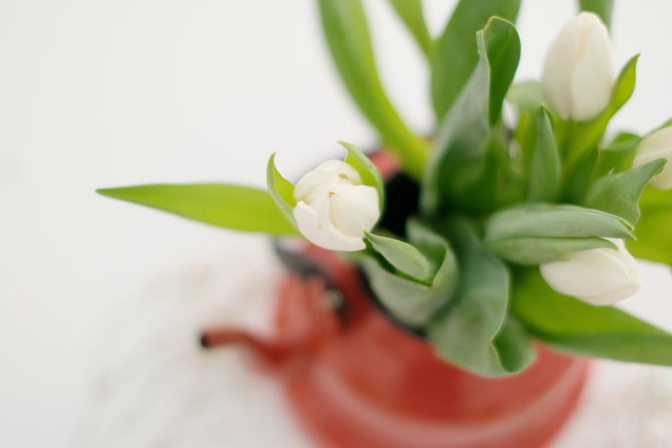 Mozzarella|tomatoes|basil Plant Flower Leaf Close-up Green Color Indoors  Nature Growth No People Freshness Flower Head White White Flower Tulips Art Is Everywhere