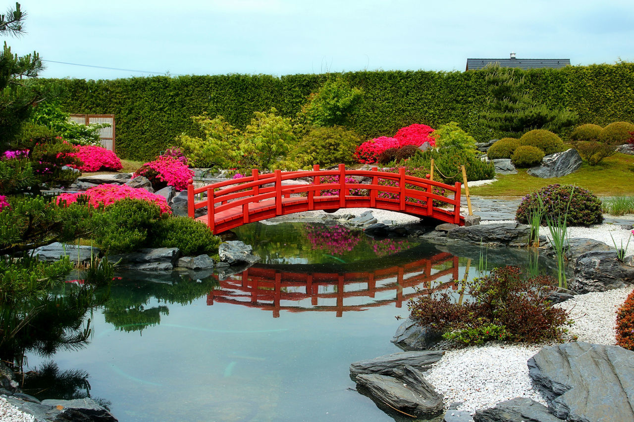 Beauty In Nature Flower Green Color Nature Park - Man Made Space Plant Red Reflection Scenics Tree Water Japanese Garden