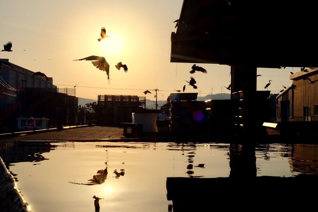 water, sunset, silhouette, reflection, bird, building exterior, animal themes, outdoors, architecture, animals in the wild, built structure, sky, lake, no people, nature, animal wildlife, clear sky, flying, day, city