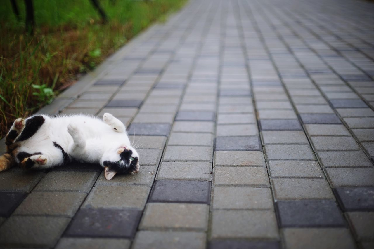 One Animal Animal Pets Animal Themes Domestic Animals Sidewalk Animals In The Wild Nature Lying Down Animal Wildlife Sleeping Mammal 街貓 Feline Katze Domestic Cat Pavement Pedestrian Let's Go. Together.
