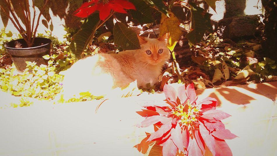 Cat One Animal Flower Nature Pets Angoracat Nochebuena Cat Lovers Catoftheday Cats Of EyeEm Cat Photography