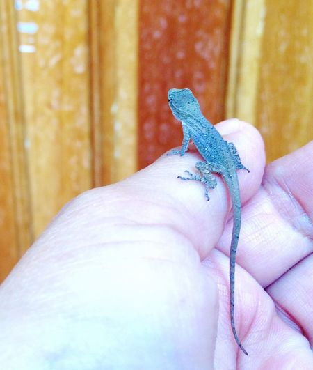 This little guy is ready to go in the house. Nature Baby Lizard Cute