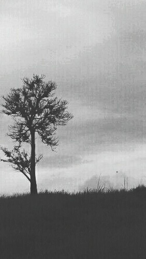 Shades Of Grey . Loneliness doesn't mean you're totally alone... you still have your shadow beside you.. Tree And Sky Eyeemphotography EyeEm Nature Lover Thisisnitiphone Greyscale Silhouette Lonelytree