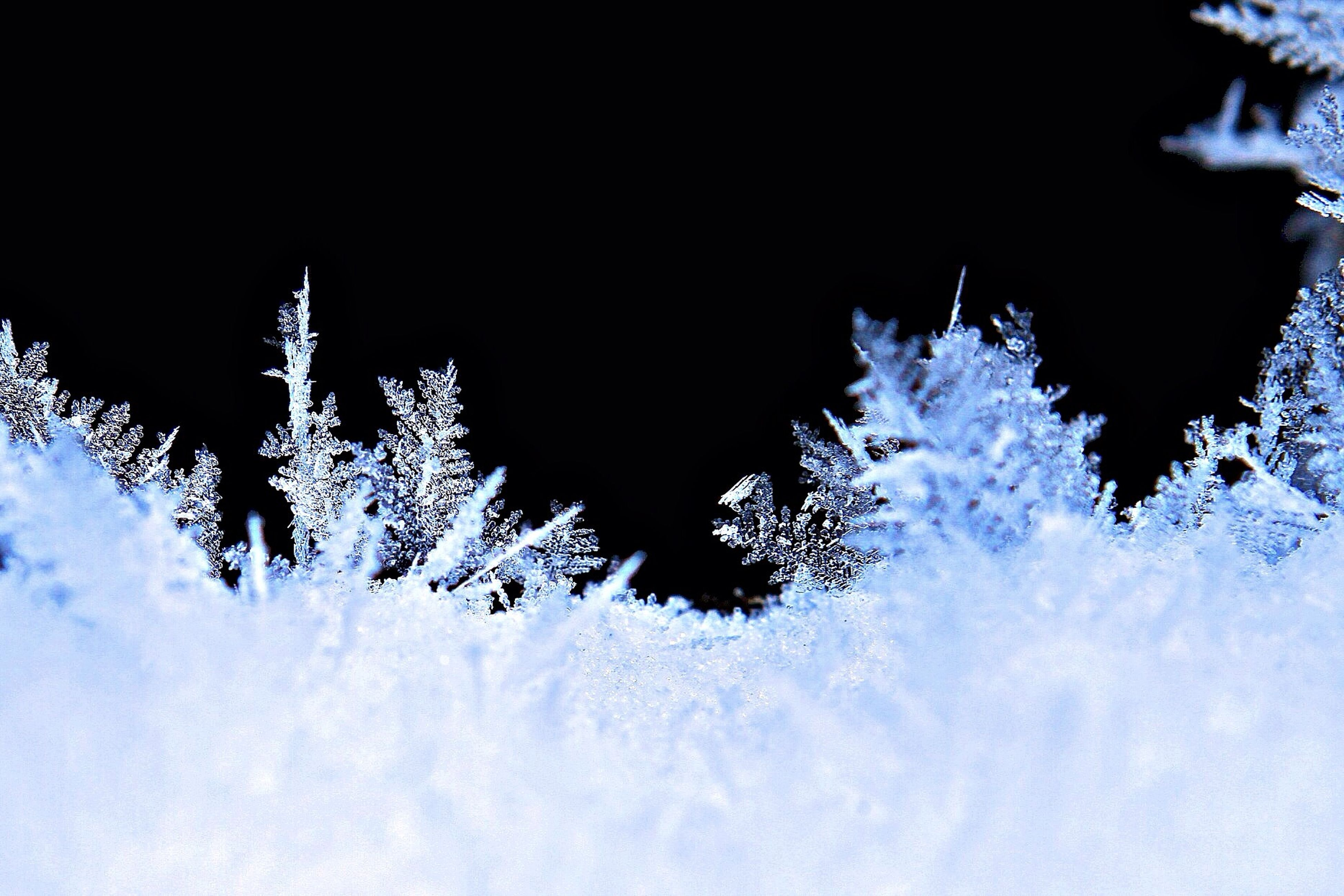 snow, winter, cold temperature, low angle view, night, tree, season, nature, clear sky, sky, beauty in nature, growth, weather, tranquility, frozen, branch, outdoors, bare tree, covering, no people
